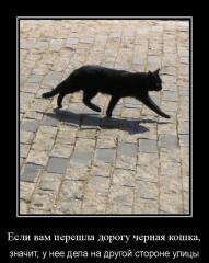 Черная кошка?