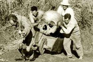 skull-pic4-452x302-61773.jpg
