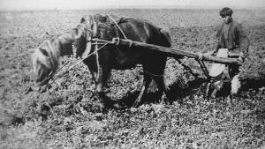 Крестьянин деревни Михайловка Пензенской губернии во время пахоты, 1898 год