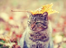 AutumnCat_6knjk.jpg