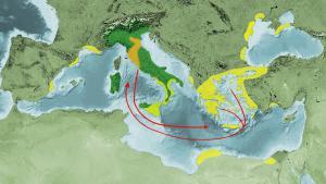 пути миграции.jpg